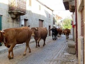 Gentes e Locais/Aldeias rurais do Barroso