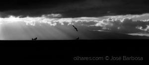 /As gaivotas cósmicas na LUZ da PAZ .