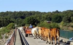Gentes e Locais/Portugal rural