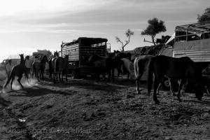 Gentes e Locais/ciganos e cavalos