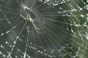 Animais/Aranha/Spider