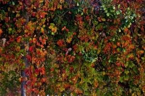 Paisagem Natural/Outono I