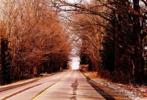 /Árvore sem folha em invernos rigorosos parece que