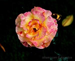 /Qualquer um pode amar uma rosa, mas é preciso um g