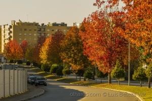/Outono Seco na cidade