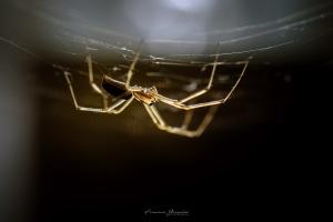"""Macro/""""A Aranha do meu Destino"""""""