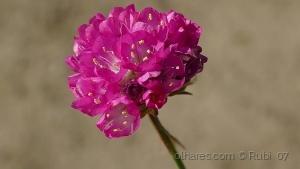 /Minúscula flor