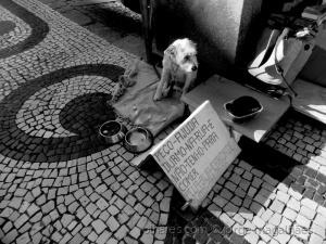 Fotojornalismo/Vida de cão  (ler)