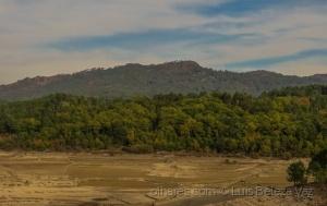 /Reflorestação ou desertificação?