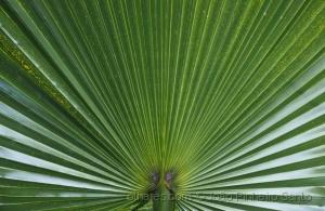 Outros/Tecto de Palmeira