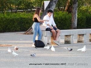 """/Photo #2316 """" DAR DE COMER AOS POMBOS ... """""""