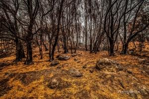 Paisagem Natural/After The Calamity