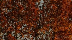 /Cores de Outono