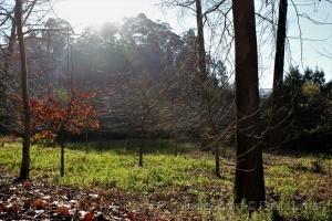Paisagem Natural/«O último dia de outono»