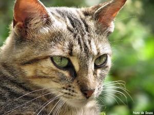 Animais/Um belo Felino