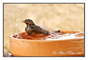/Banho refrescante