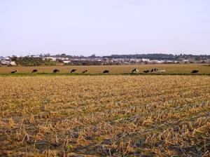 /Ao fundo a milha linda vila Alentejana...