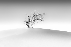 Paisagem Natural/Só na duna
