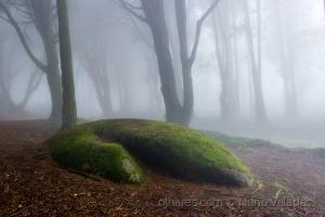 /Enchanted florest