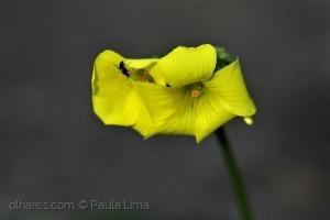 Macro/«weighing on the petal»