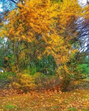 Paisagem Natural/Um jardim encantado