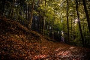 Paisagem Natural/Follow me...