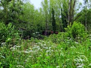 Paisagem Natural/Meu bosque verde
