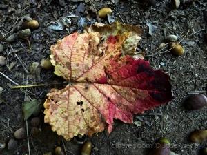 Paisagem Natural/Sou folha de outono