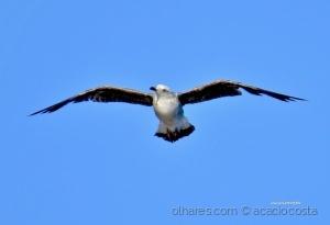 /Uma gaivota voava, voava!...