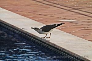 /Uma ida a piscina........