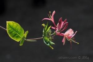 /a flor