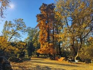 /Um pouco de sol no parque Giadini
