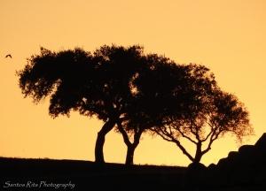 / Trees