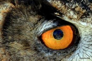 /Olhos
