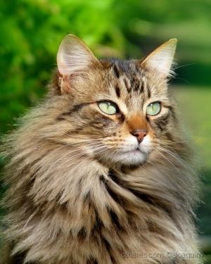 /Cute Cat
