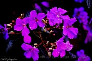 Outros/coroa de flores