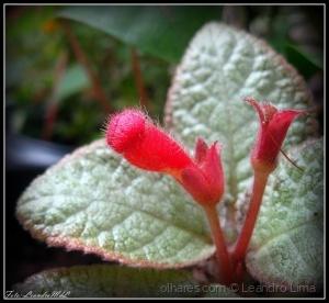 /Flores do meu jardim X