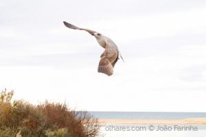 /Liberdade de Voar