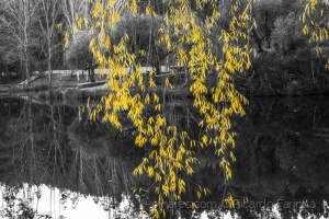 /yellow leaves