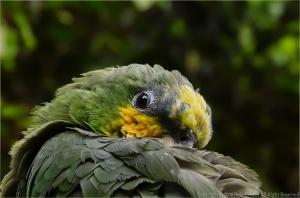 Animais/Papagaio ...(ler)