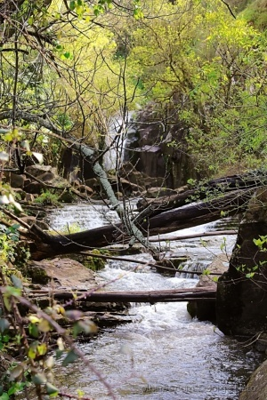 Paisagem Natural/A Caminho da Cascata