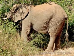 /Elefante branco - juvenil