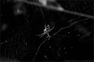 Animais/Aranhas...(ler)