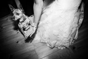 Outros/Dog's bride