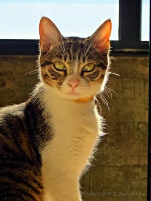 Animais/Cookie a minha gata