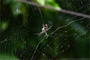 Animais/Aranhas ... colorida  (ler)