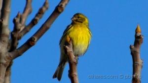 Animais/A figueira que dá pássaros.
