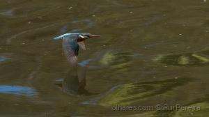 Animais/Guarda-rios - 1/5000 sec