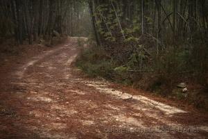Paisagem Natural/O caminho do mundo