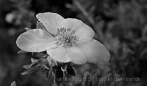 Macro/FLOWER!!